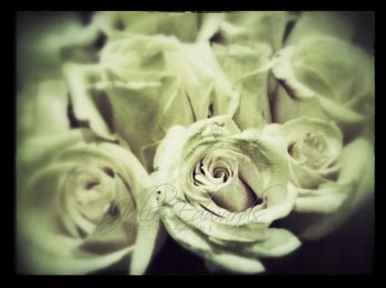 Roses vintage processing